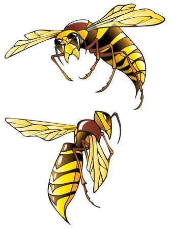 Hornet oder Wespen, in zwei Posen, illustration
