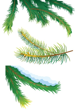 Set of fir tree branches, vector illustration Stock Vector - 8251390