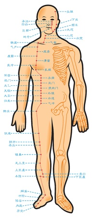 Chinese acupuncture points, with native hieroglyphic names, illustration Vector