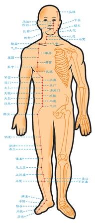 meridiano: Chino de acupuntura puntos, con nombres nativos de jeroglíficos, ilustración