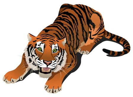bengal: Roaring angry tiger illustration