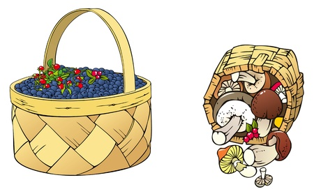 spore: Forest harvest  berries and mushrooms in the basket Illustration