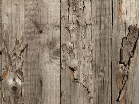 timbered: Pattern of old weathered timbered wall            Stock Photo