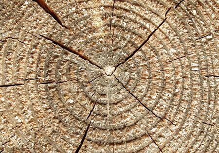 Wood circle