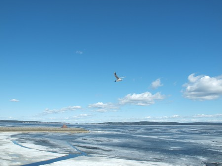 onega: The seagull flies above lake on a background of the blue sky. Quay of Onega. Petrozavodsk, Kareliya, Russia