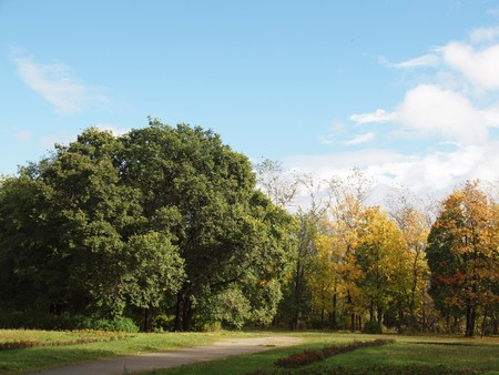 alder tree: Park in the fall     Stock Photo