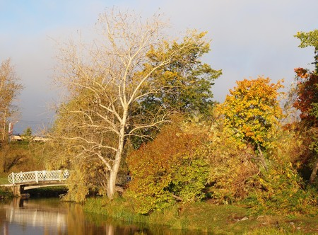 alder tree: Park in the fall