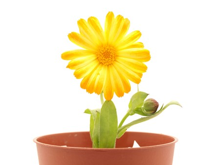 Flower on a white background Stock Photo - 7876108