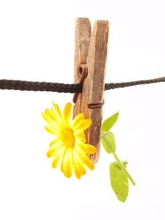 Flower and clothespin on a white background Stock Photo - 7876183
