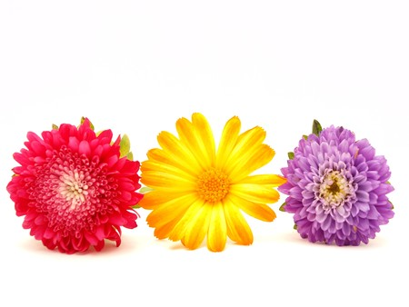 Flowers on a white background   photo