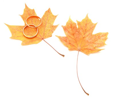 Wedding rings and maple leaves on a white background   photo
