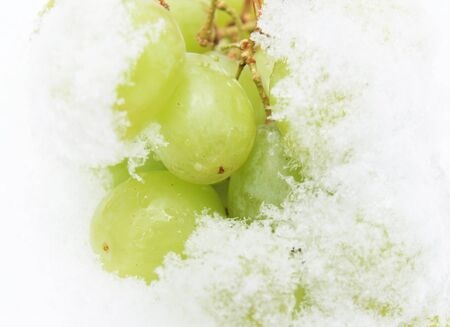 Grapes on snow Stock Photo