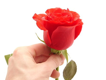 mujer con rosas: Rose y el brazo sobre un fondo blanco