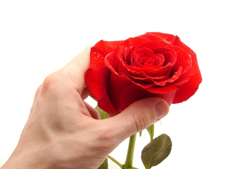 laque: Rose and arm on a white background