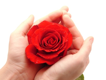 Rose and arm on a white background