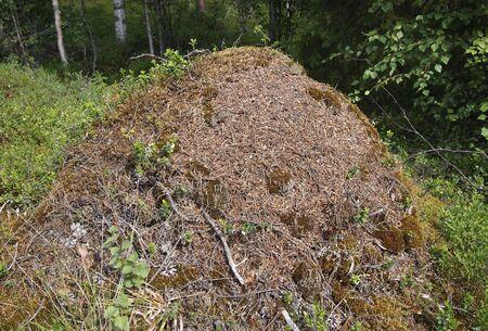Ameisenhaufen Standard-Bild - 9966109