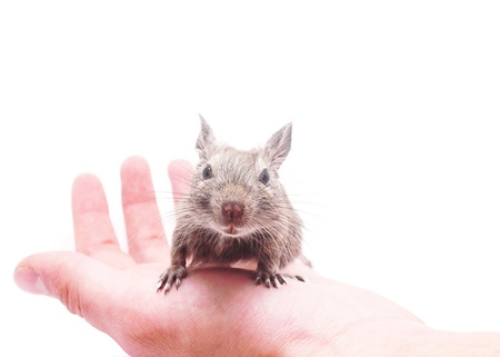 laughable: degus at hand