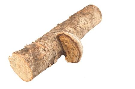 白い背景に火口の菌類 写真素材