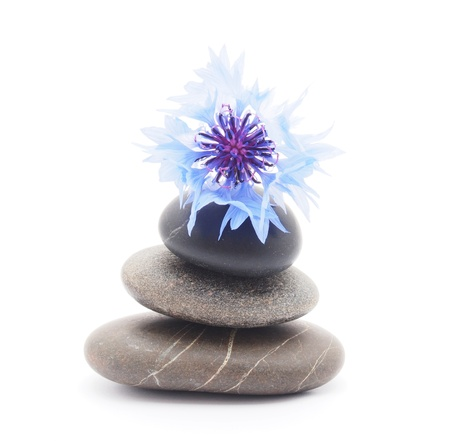 knapweed flower and pebbles on white background