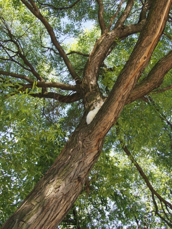 wilds: trunk of the tree