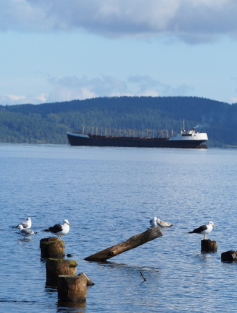 ship, piles and gulls on the lake Stock Photo - 16177878