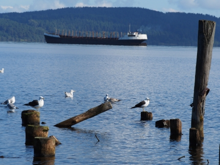 ship, piles and gulls on the lake Stock Photo - 16179058