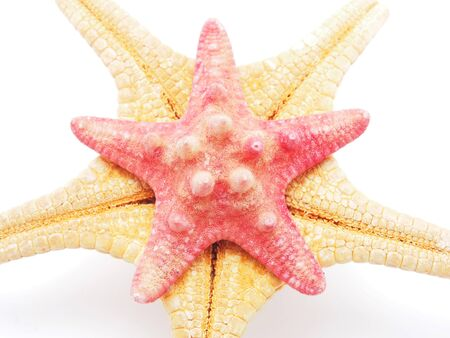 Starfish on a white background photo