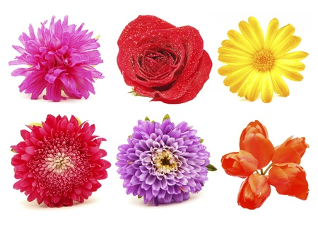 Blumen. Set Standard-Bild - 19286403