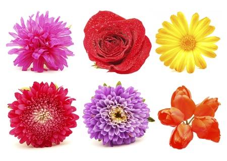 Flowers. Set Stock Photo