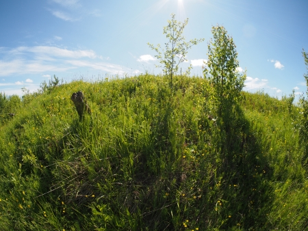 sunny meadow Stock Photo - 20405816