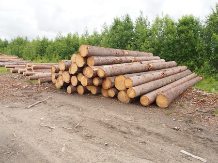 logging truck: The logs on the road