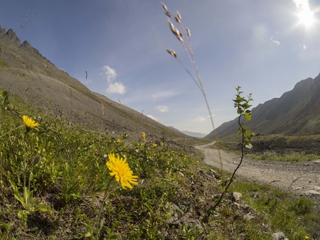 vastness: Flowers in the mountains