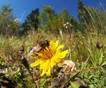 fly hoverfly on a flower Stock Photo - 22242042