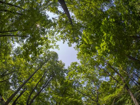 crown trees