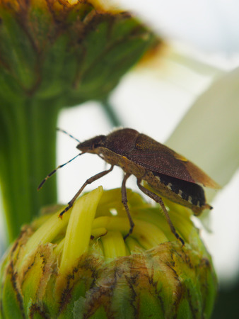 Forest bug on a flower photo