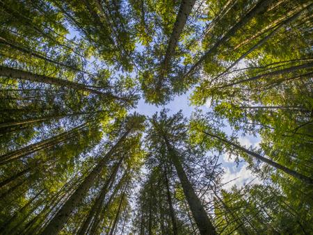 Krone Bäume Standard-Bild - 23250289
