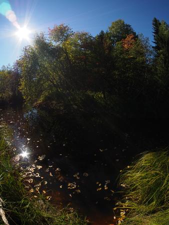 riverside landscaping: riverside