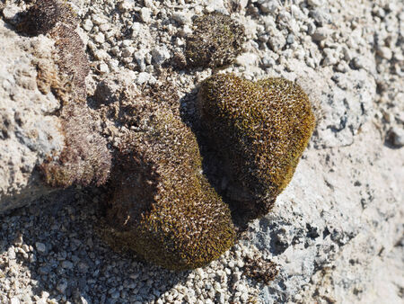 moss on a stone in the shape of heart photo
