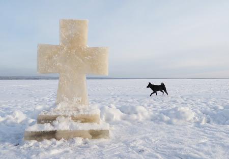 ice cross and dog on the lake photo