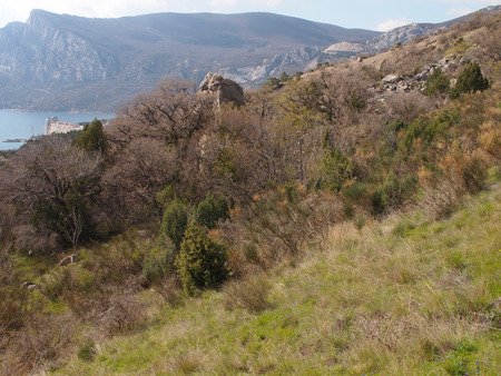 crimean: Trees in the Crimean mountains