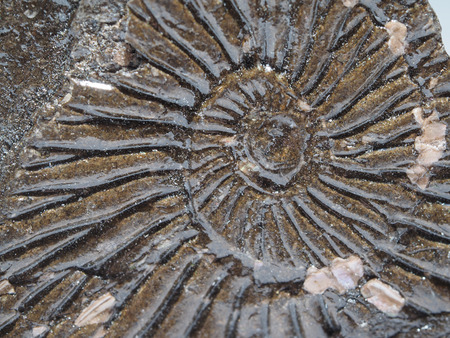 imprint of ancient animals on a white background  版權商用圖片