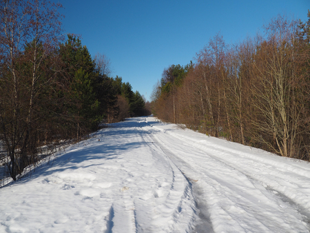 road in the forest in winter photo
