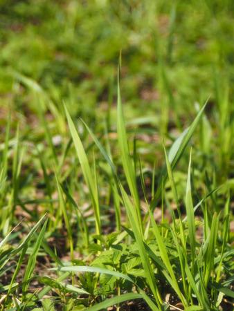 grassy plot: grass