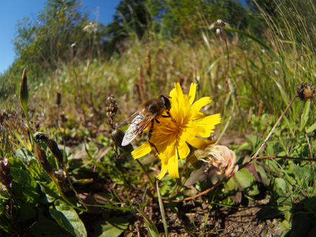 gadfly: gadfly on flower