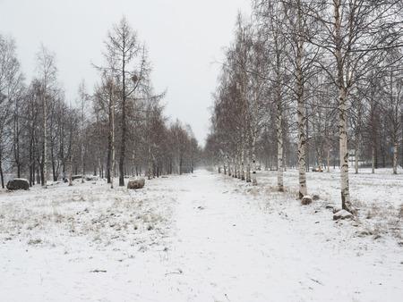 snowy landscape photo
