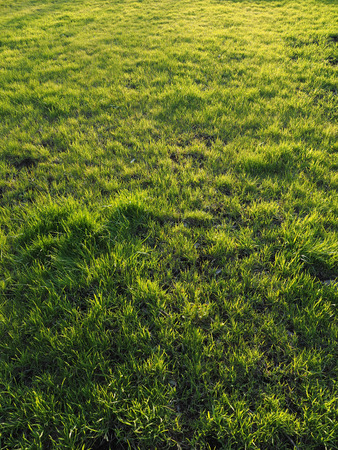 grassy plot: hierba