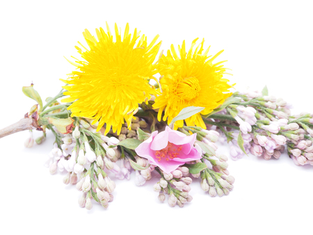 wild flowers on a white background photo