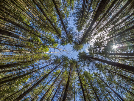 big tree: crown trees