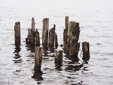 pilings: old piles in the lake