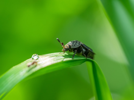 beetle on the stem of a plant